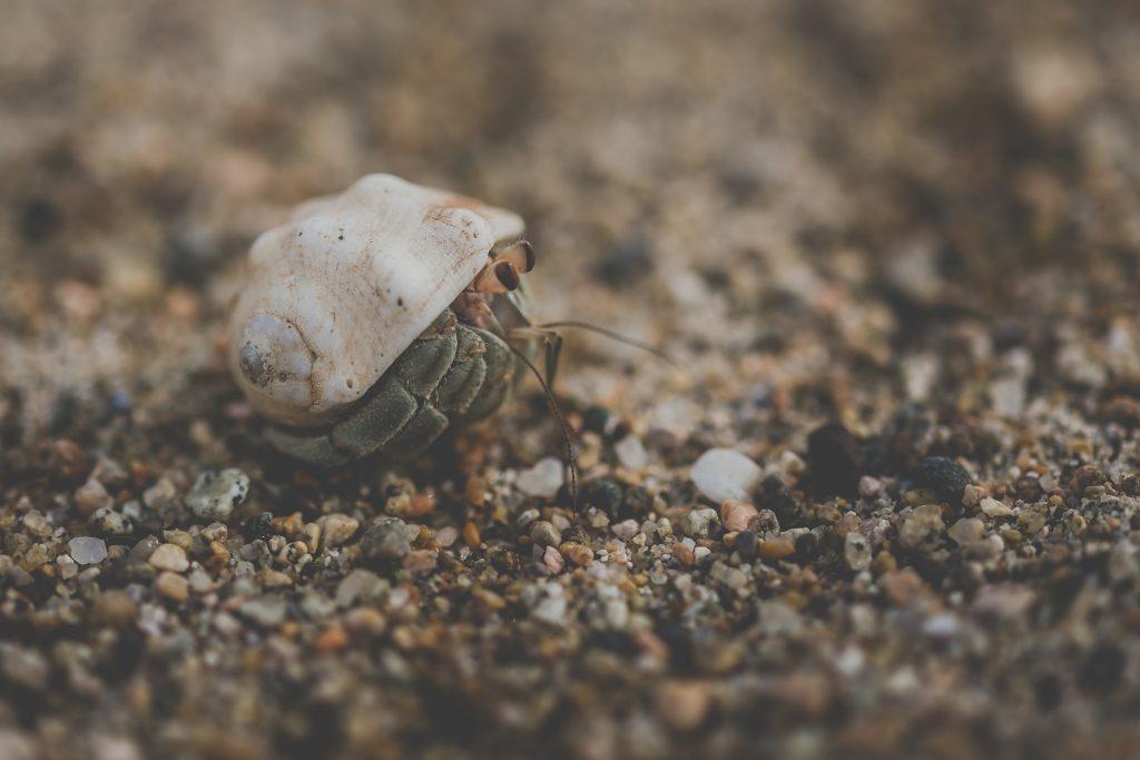 Best hermit crab essays
